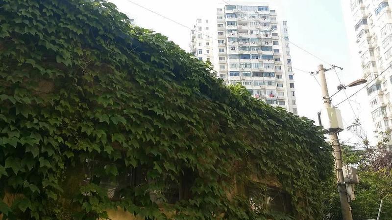 博山小区小区照片13