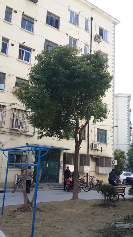 金杨新村九街坊小区照片6