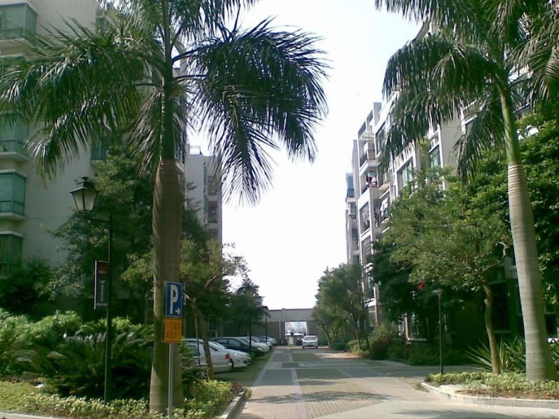 棕榈假日小区照片6