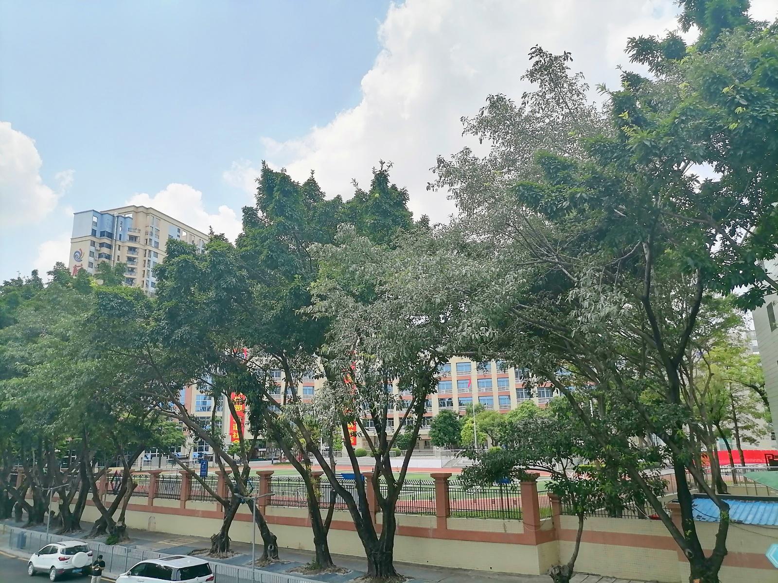 深圳市龙华清湖小学17