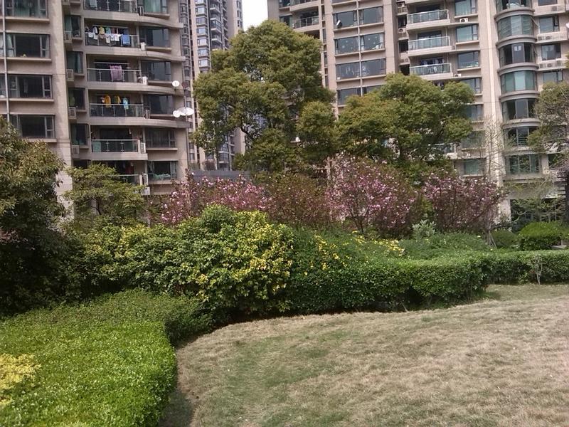 瑞虹新城二期小区照片8